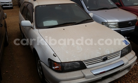 Buy Toyota Corolla White Car in Arua in Uganda