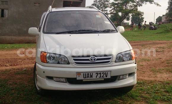 Buy Toyota IST White Car in Arua in Uganda