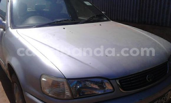 Buy Toyota Corolla Silver Car in Gulu in Uganda
