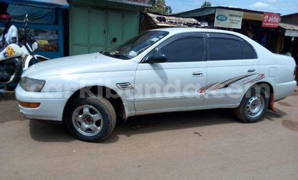 Buy Toyota Corona White Car in Arua in Uganda