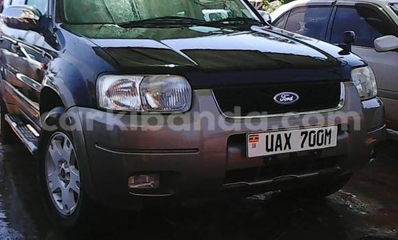 Buy Ford Escape Blue Car in Arua in Uganda
